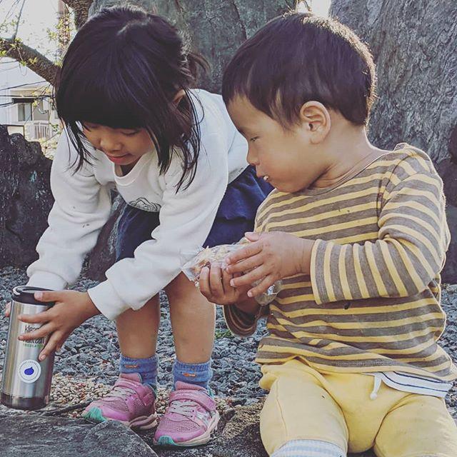 【公園でシナモンロールとコーヒー】みなさん、日々変化する状況の中、毎日を過ごされてるかと思います。私も今週はいよいよ、保育園も自粛です。3人の子供が家にいます。まぁ、色々半端ないですが(笑)今日は午前中だけ旦那さんに家事と育児をお願いし、私は完全に仕事モード。午後からは逆に私が家事と育児で、旦那さんが仕事する。やっぱり仕事しながら子供たちと触れ合うってのは無理があるので、こうキッパリ役割分担したほうがストレスは少ないかな。と私は思ってます。毎日がおうち学校という設定なので、授業にプリキュア鑑賞とかもれなく入ってくるのだけれど(笑)時間割を3人のやりたいことで作る。今日は公園に行く!という時間割があった。公園といっても遊具もなにもない公園なんだけど、とりあえず子供たちにはシナモンロール、私は自分用にコーヒーをタンブラーに入れて出発。→自分を上げるアイテム大切!!3人並んで私の焼いたシナモンロールをムシャムシャ食べてる姿をコーヒー飲みながら眺めてたら、なんか、それだけで、めちゃくちゃ幸せな気持ちになった。ただ走るだけで楽しくなっちゃう子供たちに、私は日々生かされております。おとなも大変だけど、子供たちも変化の渦の中にいる。この数カ月で親が子供と何を共有できるか、ってめちゃくちゃ大切だな、と思いました。学校行ってない子供たち、働いてる親をめちゃくちゃ見てます。こんなにも接する時間が長いことなんてそうそうない。その目に何を映してあげられるかな。今オンライン以外のリアルコミュニケーションは親子。もう教育は学校の責任!なんて世界は終わりかな。 ・・・・・・・・・・・・・・お知らせ。金曜日の直売は、今週から完全予約制で販売させていただきます。店頭受け取り(12時から13時)と配達パンを考えてます!詳細は明日発表しますね。できる限りがんばってパンをお届けしたいと思っています。#オオトパン#日常#子育て#リモートワーク